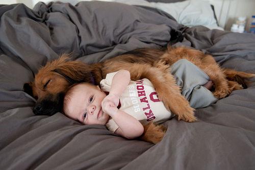 perro duerme abrazado a un bebé